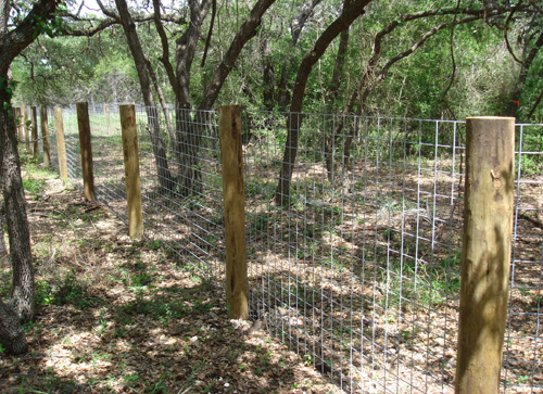 cattle panel fence with treated pine posts