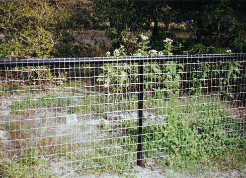 chicken wire fence with black metal poles and frame